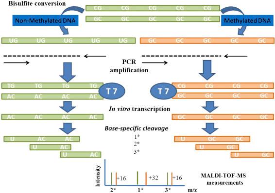 The principle and process of MassARRAY