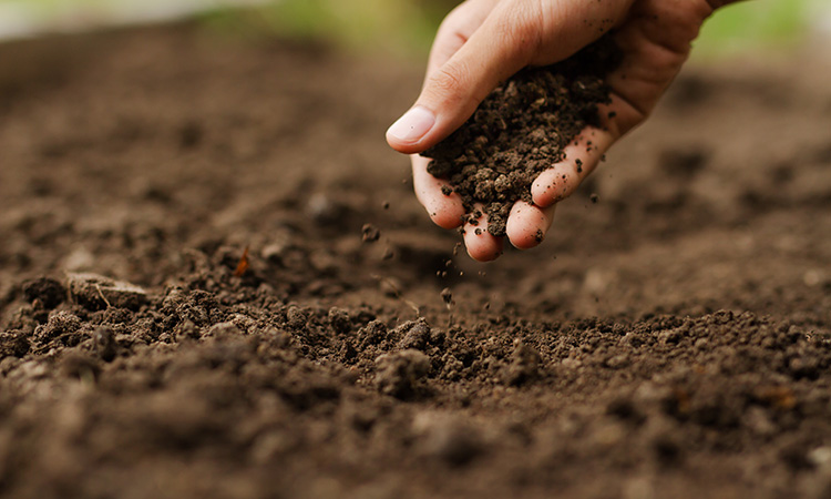 Disentangling the complexities of the soil microbiome