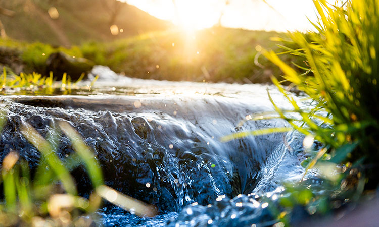 Explore the microbial abundance in water