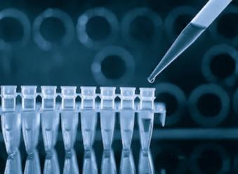 PCR-based Microbial Antibiotic Resistance Gene Analysis