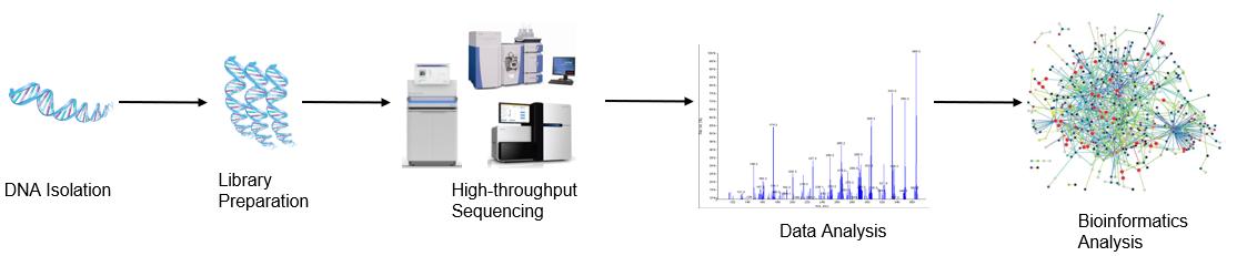 High throughput sequencing analysis process