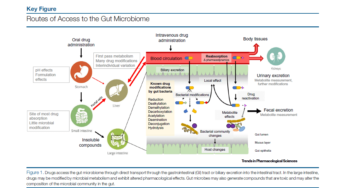 The effects of the gut microbiome on drug intake.