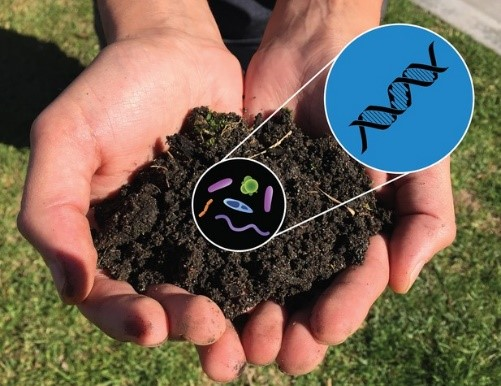 Microbial Diversity in Soil