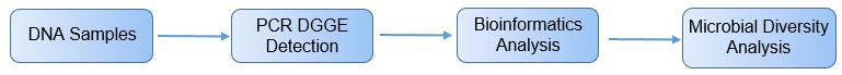 PCR-DGGE analysis process