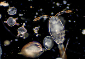 ocean-microbiome-research