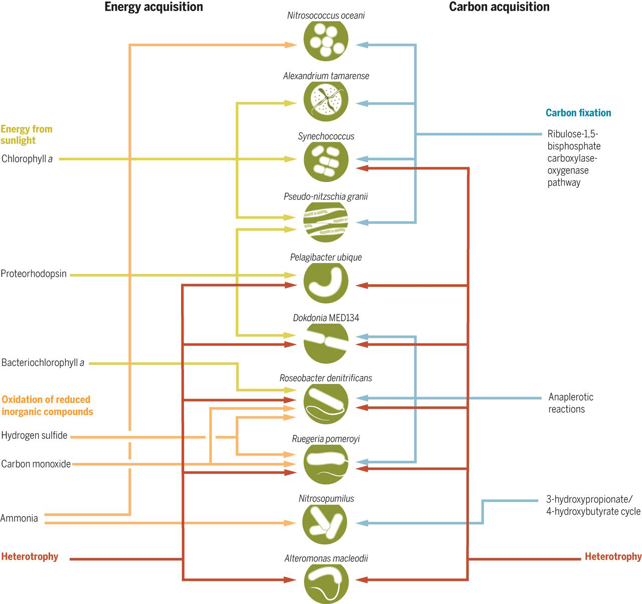 Trophic categories of the ocean microbiome.