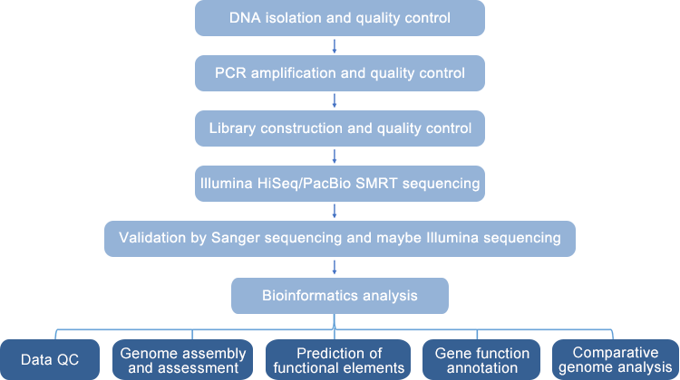Phage Whole-Genome Sequencing Workflow