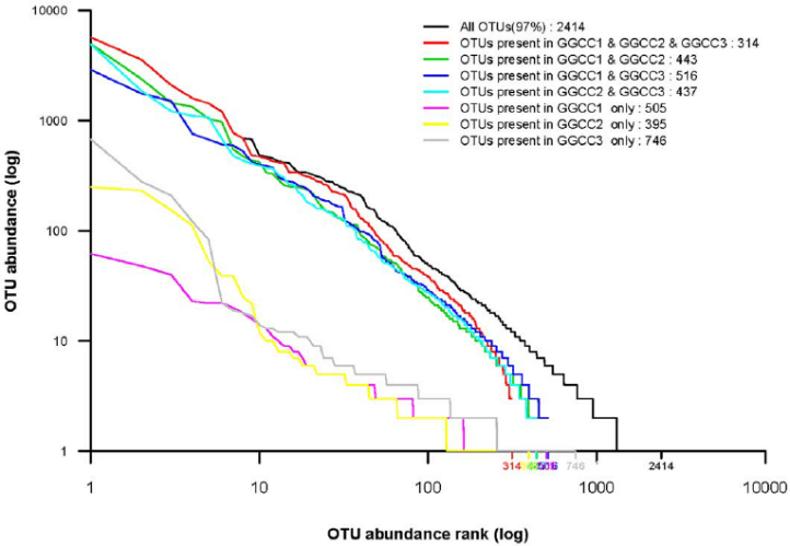 Rank abundance analysis of the different bacterial community groups.