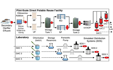 Sample Preparation Protocols for Sewage Sludge Microbiome Sequencing
