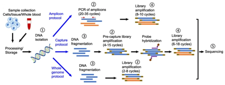 Illustration of the major protocols of typical next-generation sequencing.