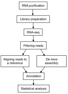 A typical workflow of metatranscriptomic sequencing