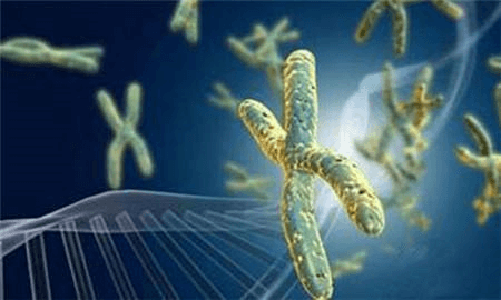 Antibody Screening Sequencing