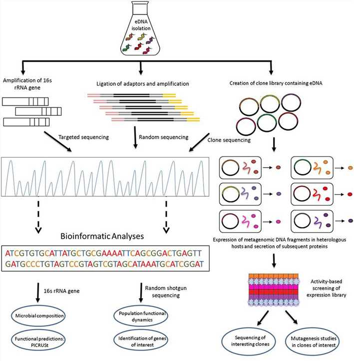Functional metagenomic strategies for the identification of novel biocatalysts and bioactives from environmental samples
