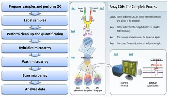 Workflow of CGH Microarray Service