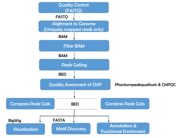A Bioinformatics pipeline for analysis of ChIP-seq data.