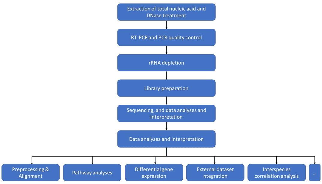 Dual RNA Sequencing: Definition & Principle, Workflow, and Applications