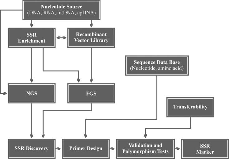 Workflow steps of SSR (microsatellite) marker development.