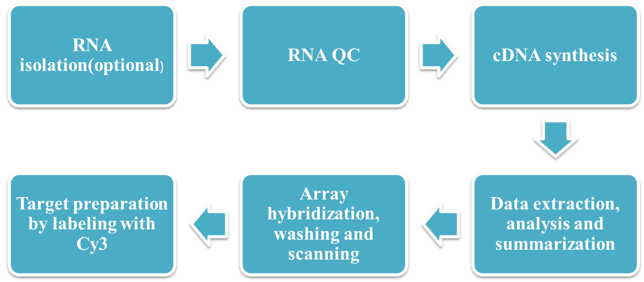 Workflow of LncRNA Microarray Service