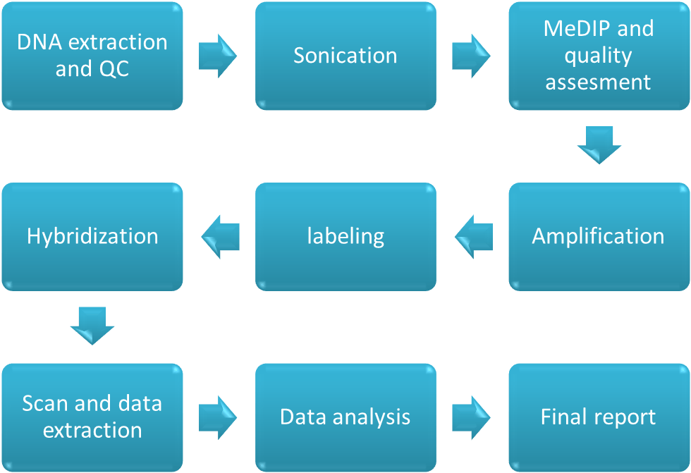 Workflow of Methylation Microarray Service