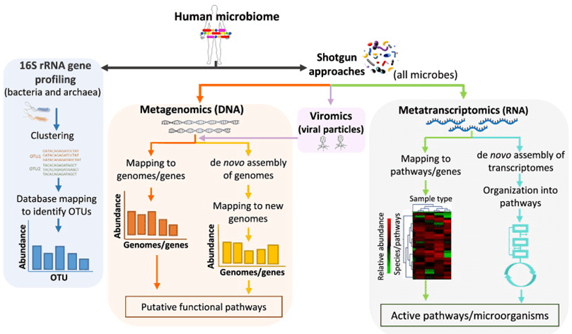Strategies for metagenomics study. Adapted from Bikel et al., 2015