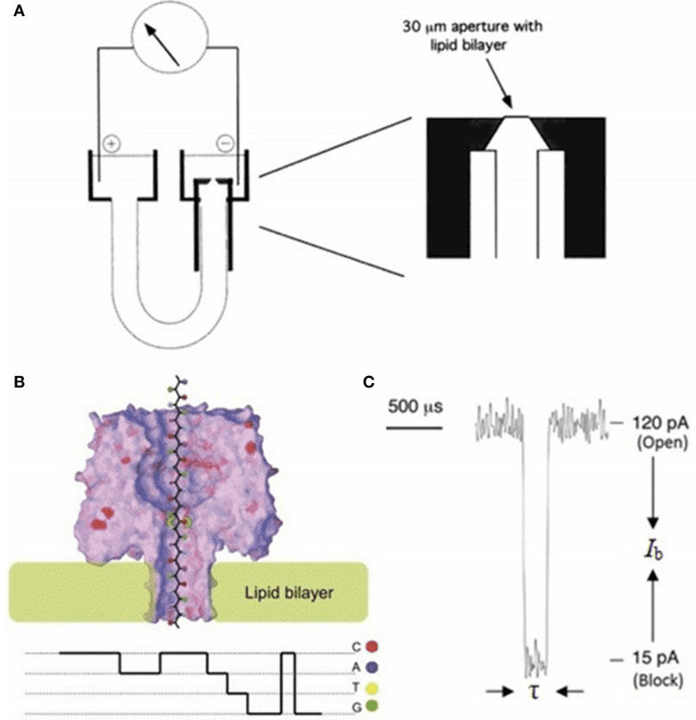 Schematic illustration of a nanopore sequencing device