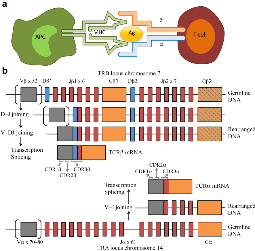 Overview of Strategies for TCR Profiling Based on Next-Generation Sequencing