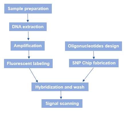 The Principles and Workflow of SNP Microarray