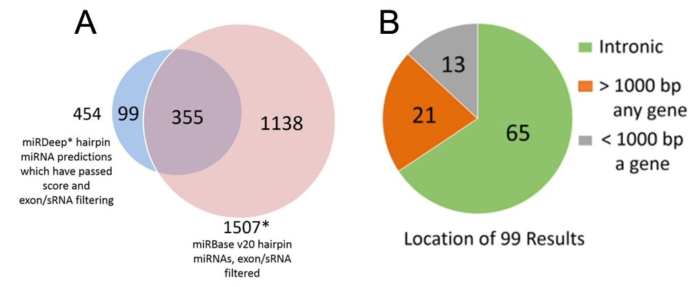miRDeep* putative miRNAs and miRBase miRNAs (A), and genomic locations of the putative novel miRNAs (B).