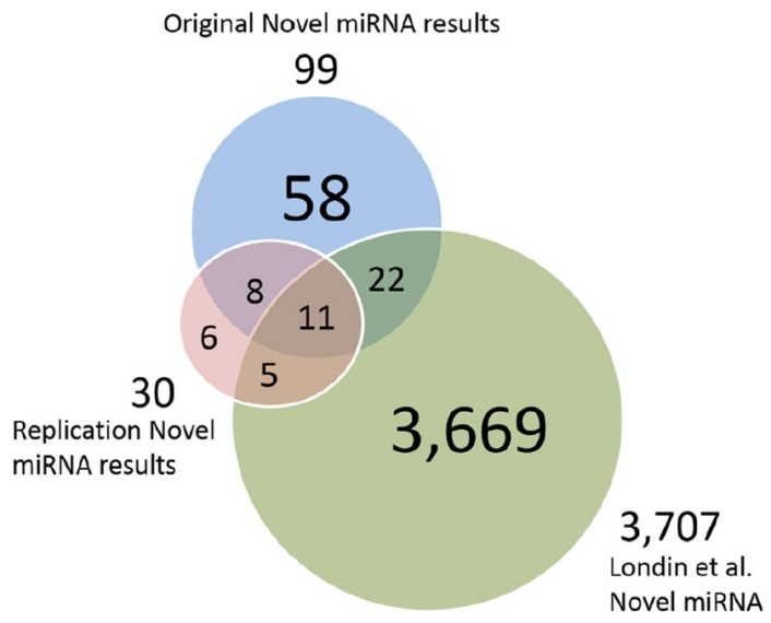 Putative novel miRNAs, replication data miRNAs and Londin <em>et al.</em> miRNAs.