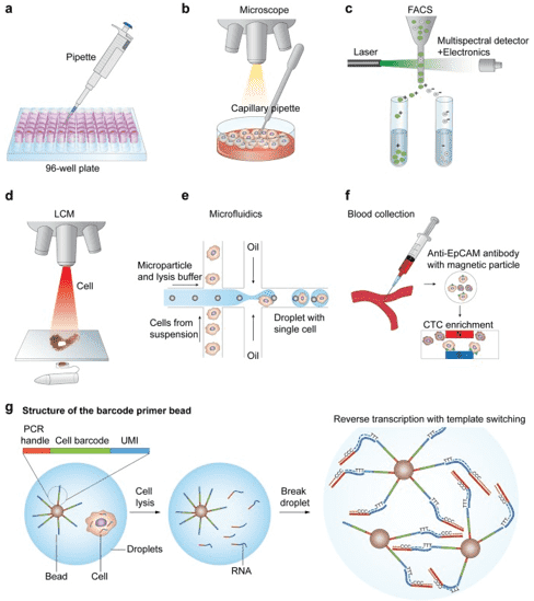 Single-cell RNA Sequencing: Introduction, Methods, and Applications