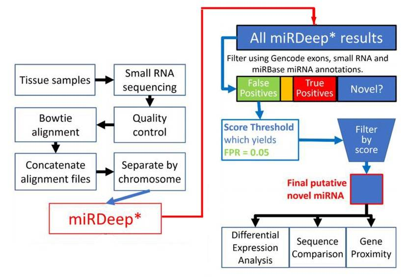 Flowchart depiction of the novel miRNA discovery pipeline.