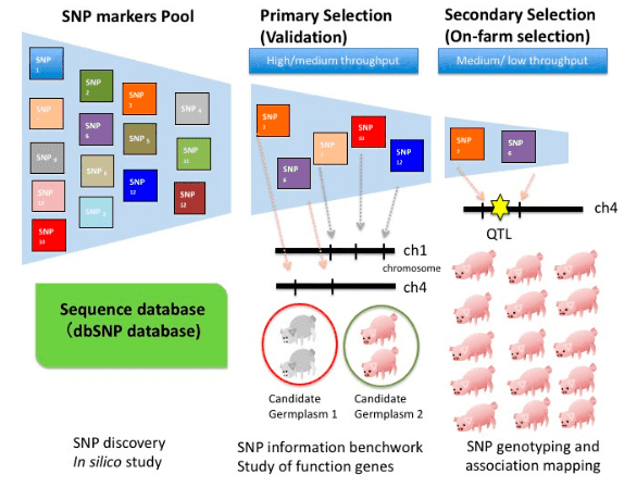 The Applications of SNP Microarray