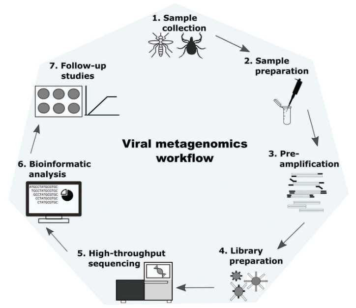Workflow diagram for metagenomic analysis of viruses