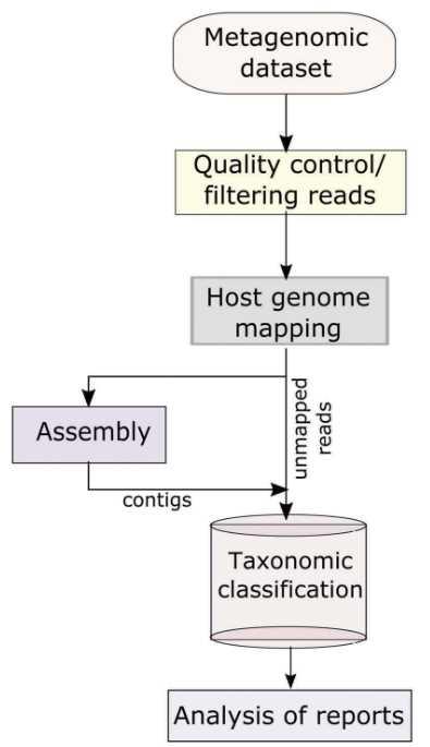The basic informatics analysis of viral metagenomics