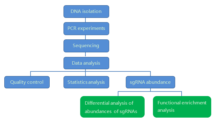 Our workflow of CRISPR Screen Sequencing