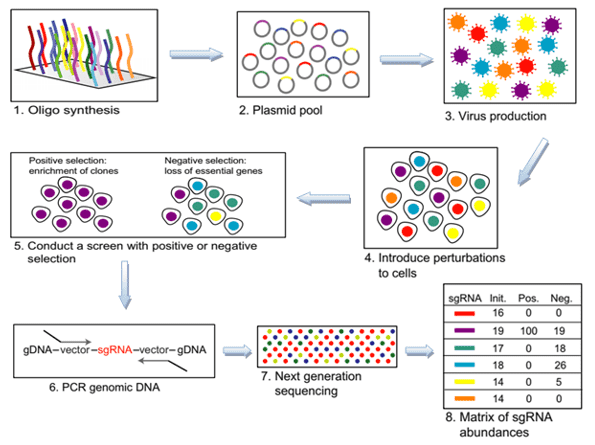 Overview of CRISPR Screening