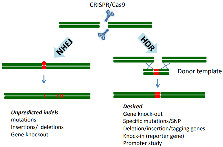 Next Generation Sequencing Validating Your CRISPR/Cas9 Edit