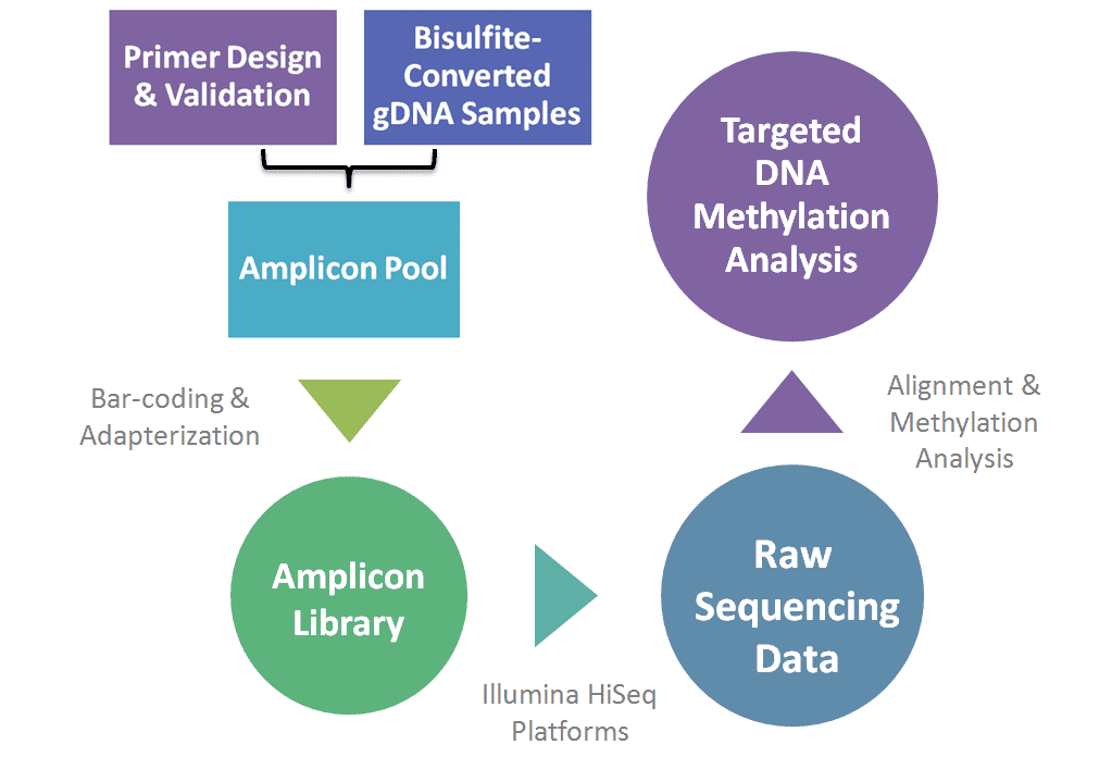Workflow diagram of KSP genotyping procedure