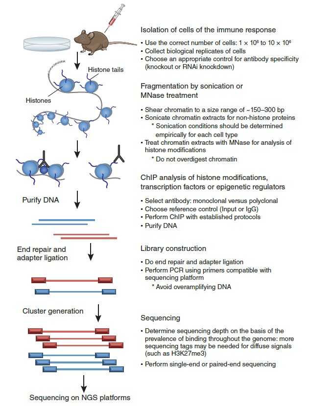 The Advantages and Workflow of ChIP-seq