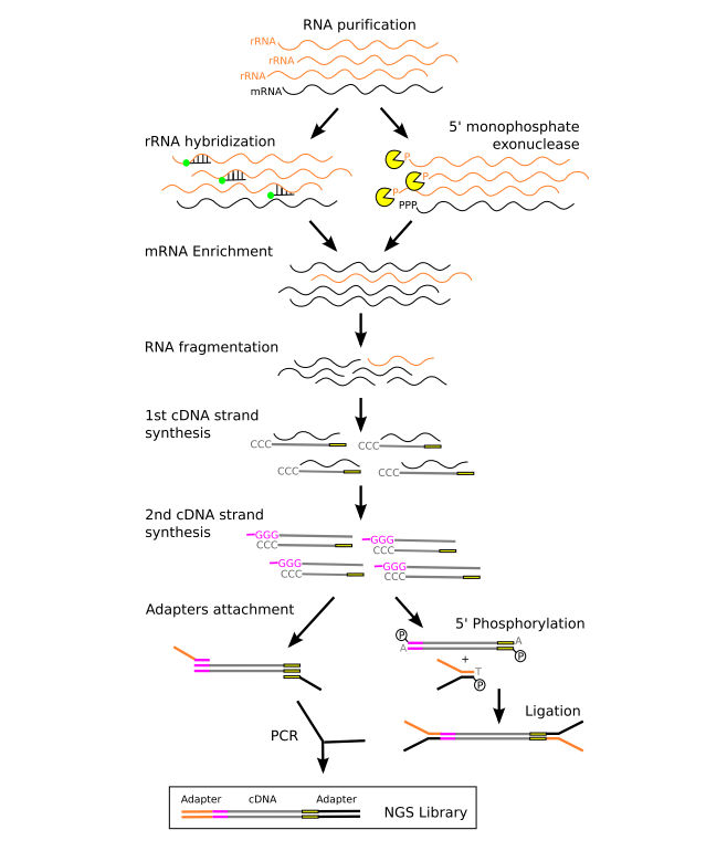 The Principles, Workflow and Applications of Metatranscriptomic Sequencing