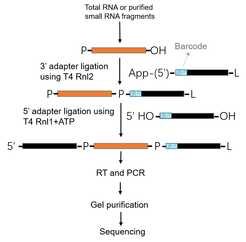 The Challenge and Workflow of Small RNA Sequencing