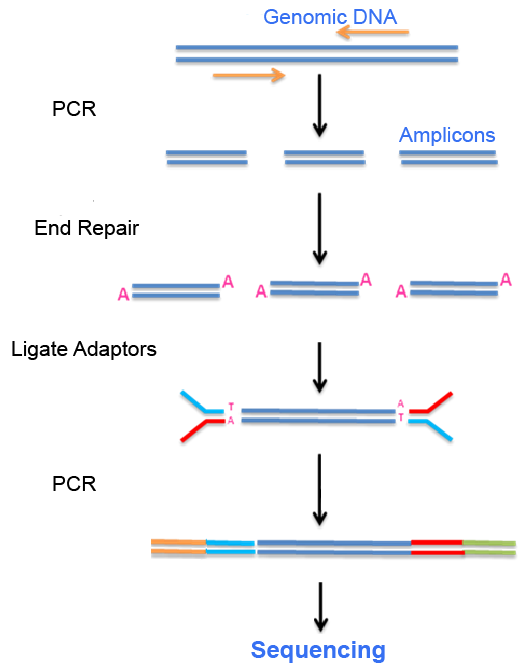 The workflow of amplicon sequencing